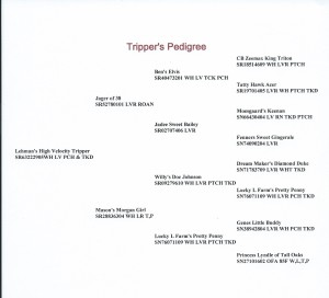 TRIPPERswebpedigree