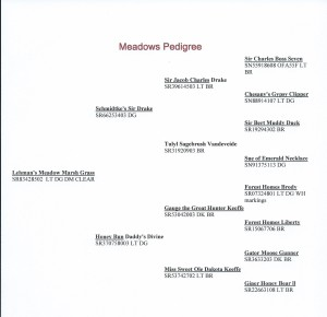 meadowswebpedigree