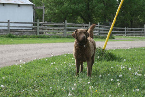 willow5-27-09
